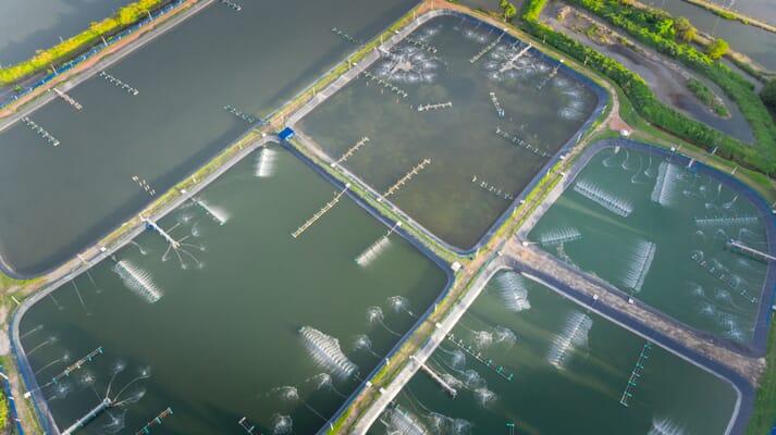 aerial view of a shrimp farm with concrete-lined ponds