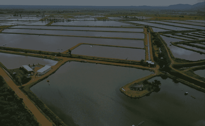 Exporcareca has been producing shrimp and tilapia in 160-hectares of ponds for the last five years
