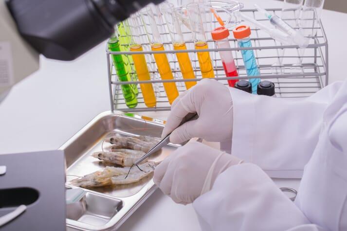Lab technician examining fully grown-shrimp