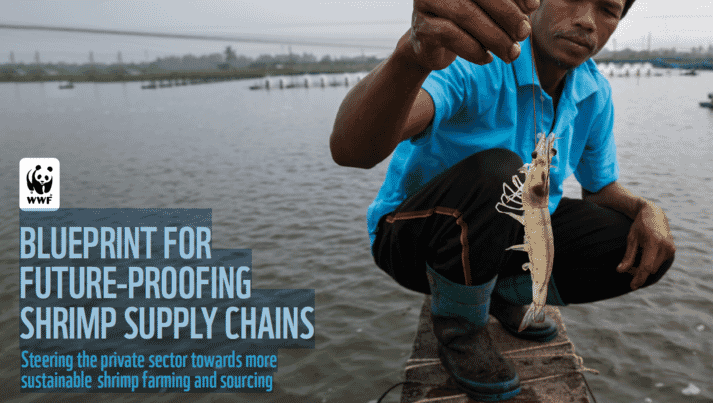 WWF's shrimp blueprint includes environmental and social ambitions