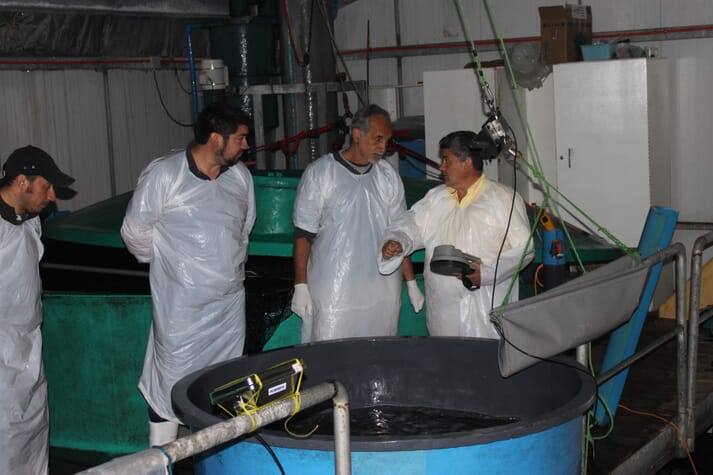 Alberto Reyes (right) founder of the company, and Dr Gidon (second right) the hatchery expert involved in the project