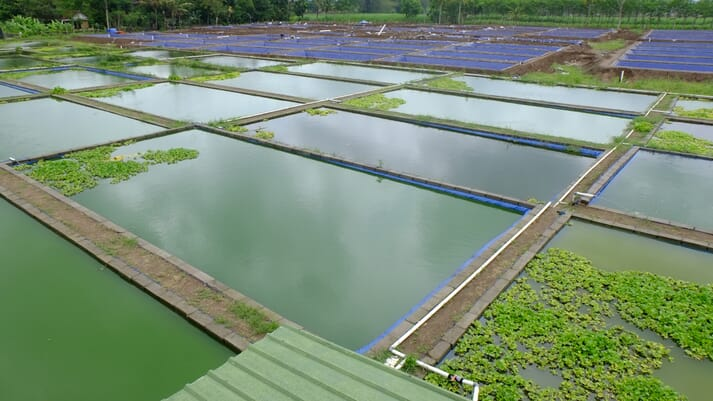 A grid of outdoor earthen fish ponds