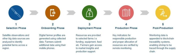 SeaWarden's model for accelerating sustainable shrimp production practices
