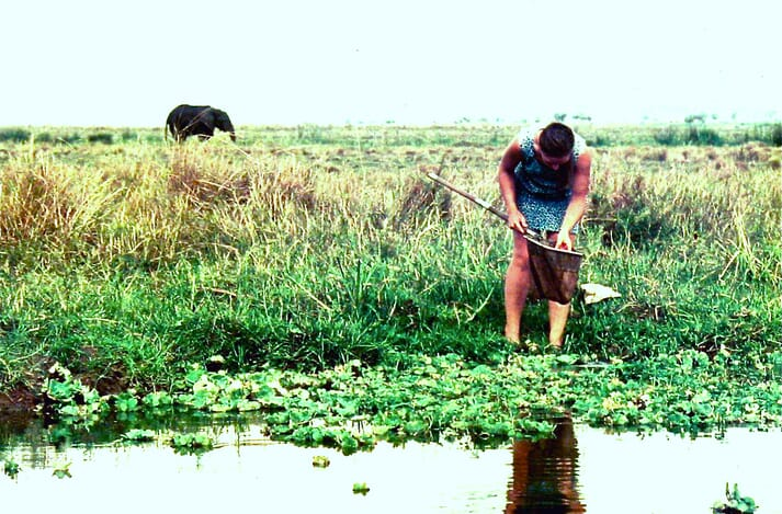 David's wife, Chris - seen here collecting tilapia fry from Lake George - played an integral part in his decision to develop probiotics