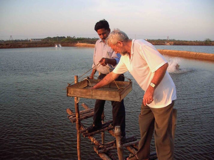 David Moriarty and an Indian shrimp farmer investigate the impact that his new probiotic strain is having on shrimp growth rates and health performance