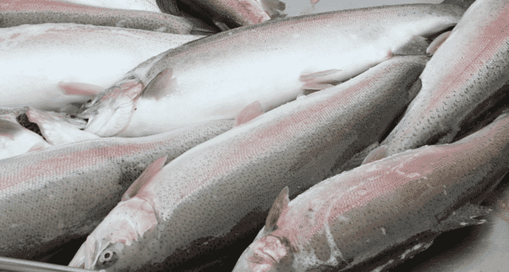 Newsan aims to produce up to 13,000 tonnes of rainbow trout a year
