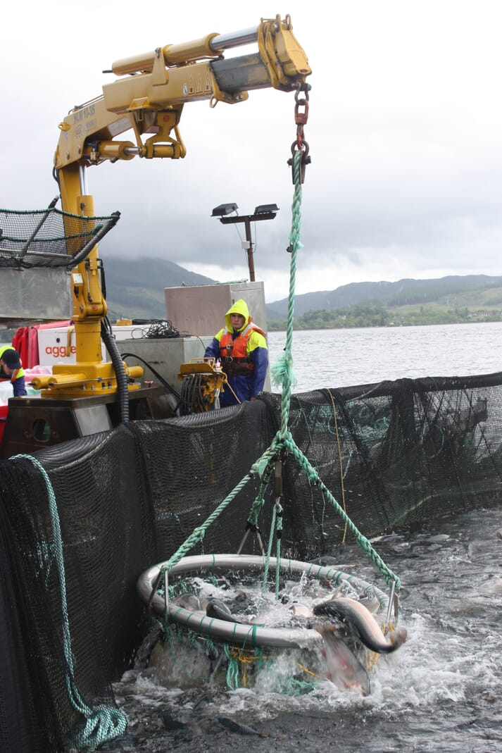 Harvesting trout at a Dawnfresh site on Loch Etive