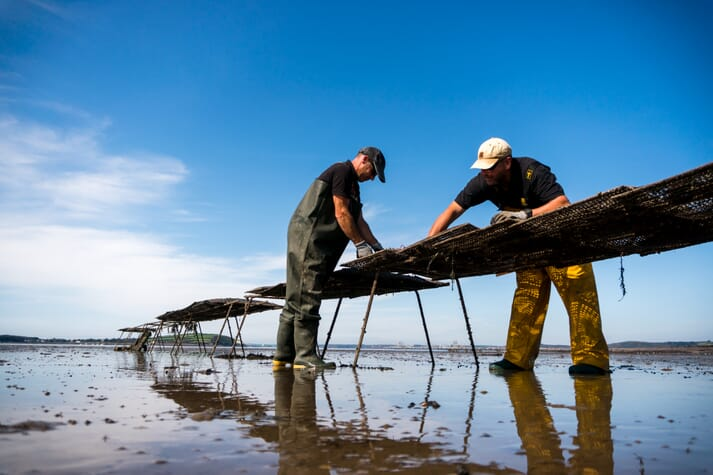 Recently launched aquaculture projects in Wales include Atlantic Edge Oysters, in Pembrokeshire