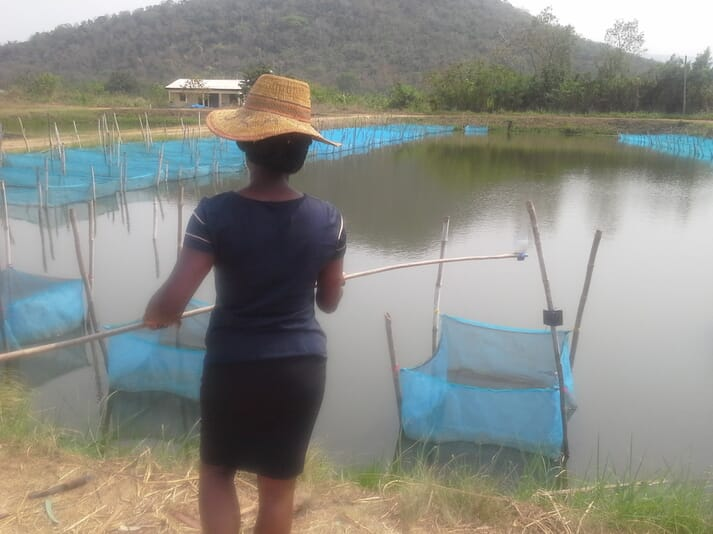 Tilapia farmers are currently limited to using ARDEC's Akosombo strain