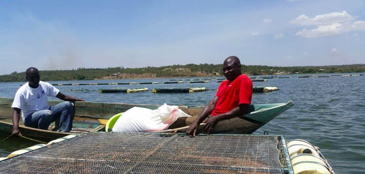 A shift to cage-based aquaculture has ben shown to reduce issue of overfishing, particularly around Migingo Island in Lake Victoria.