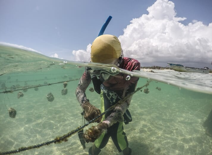 woman wearing a diving mask, cleaning sponges attached to a rope