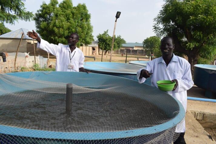 Emmanuel John, a beneficiary from Gwoza, feeds his catfish