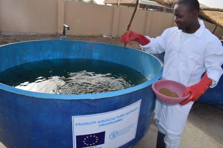 A beneficiary in Monguno LGA feeds his fish