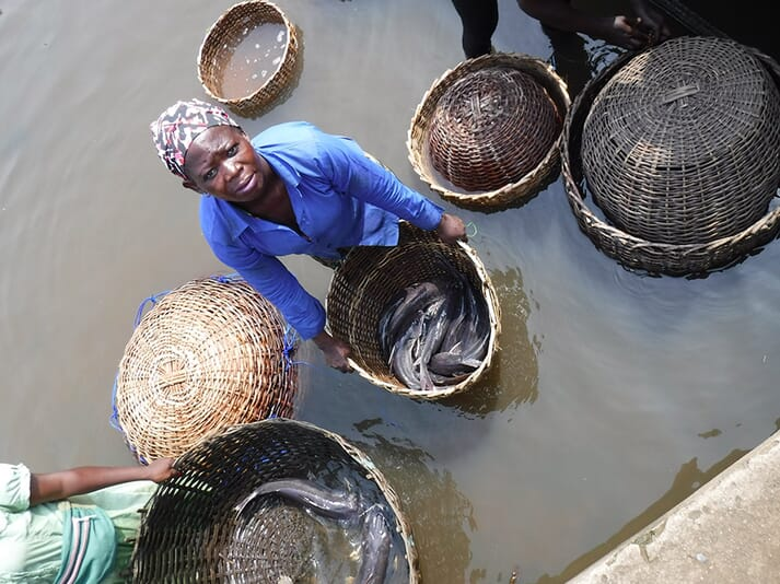 A Nigerian woman with wild-caught and farmed catfish