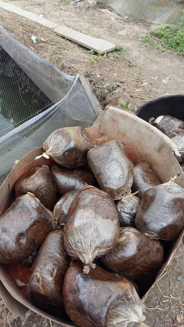 Nylon bags of catfish feed