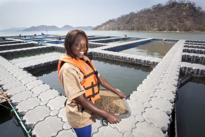 Chicoa has ambitions to produce 5,000 tonnes of tilapia a year