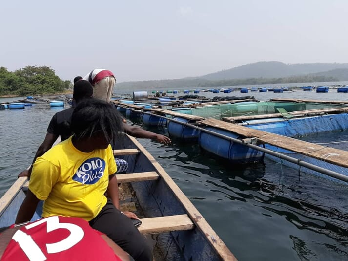 Despite the government-run vaccination programme against ISKNV, tilapia farms on Lake Volta are still producing fewer fish