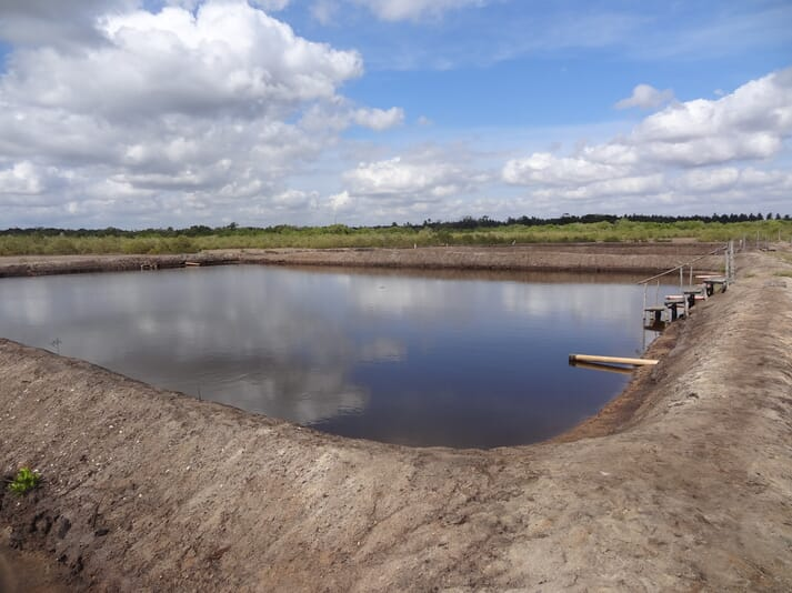 Makongeni Fish Farm contains 5 ponds, each of which can hold 3,600 milkfish fingerlings