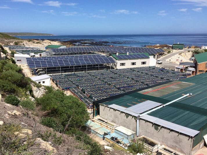 The 282 kWp solar system above a section of tanks at Atlantic Abalone, installed by Emergent Energy