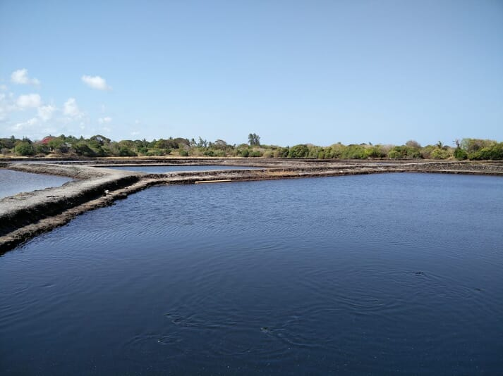 A Tanzanian tilapia pond