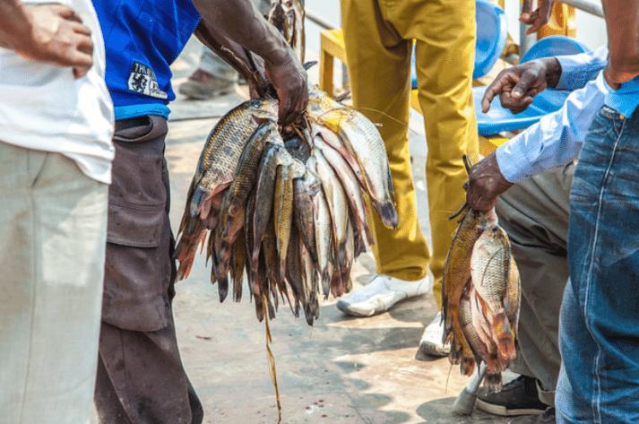 Trading tilapia, Barotse Floodplain, Zambia.