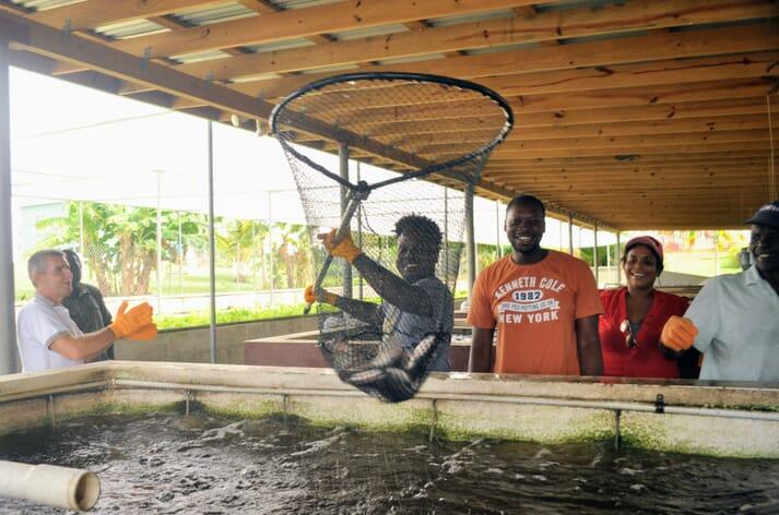 An aquaponics operation in Antigua