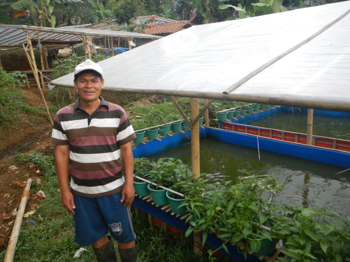 An aquaponics system in Indonesia
