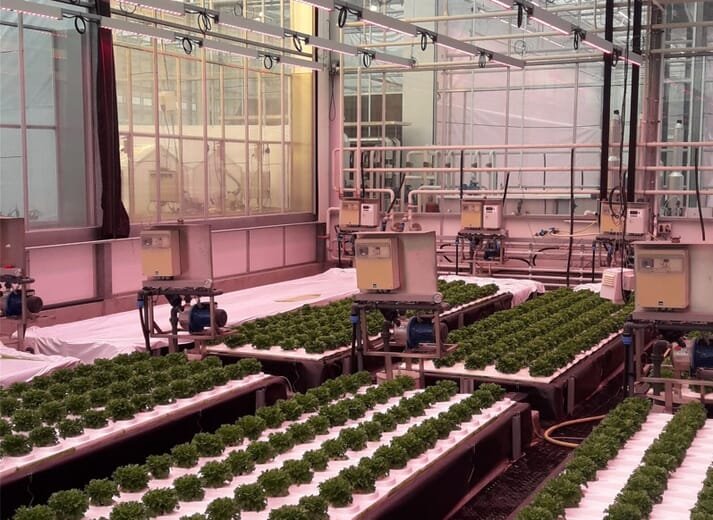 The aquaponics facility where the trial took place