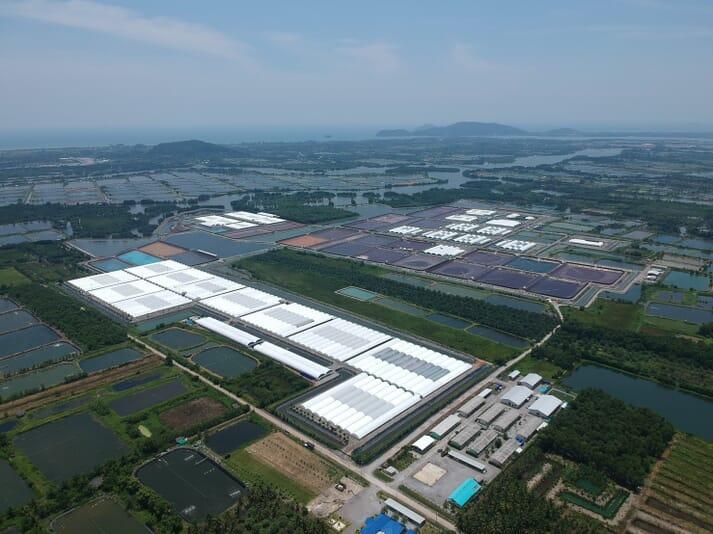 The future of shrimp farming? - CPF's Bangsrakao shrimp farm covers 960,000m2