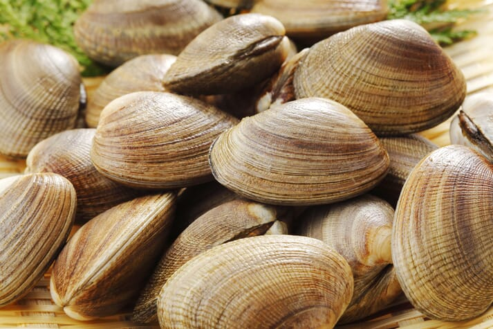 Delta Futuro aims to scale up Manila clam hatcheries and improve seed availability for farmers