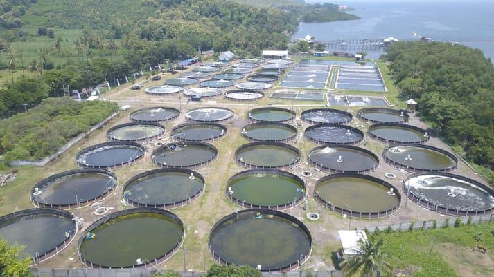 Circular shrimp ponds, operated as part of the Millenial Shrimp Farming Project, Situbondo, East Java