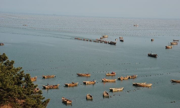 Sungo Bay in China. IMTA now accounts for over 50 percent of Chinese mariculture production
