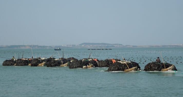 Harvesting seaweed in Sungo Bay