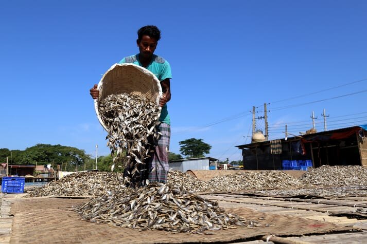 man emptying a basket of fish onto a mat