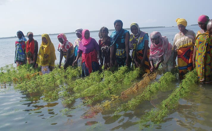 The FAO is keen to encourage climate smart aquaculture