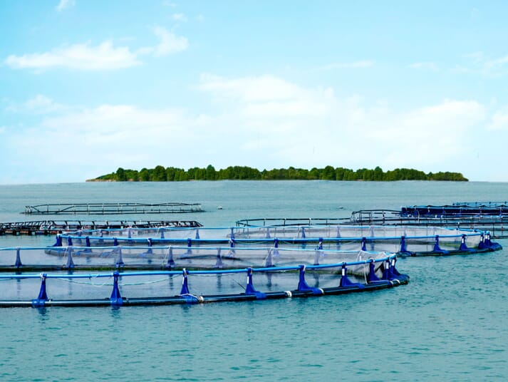 Barramundi Asia operates two sites in the Singapore Strait