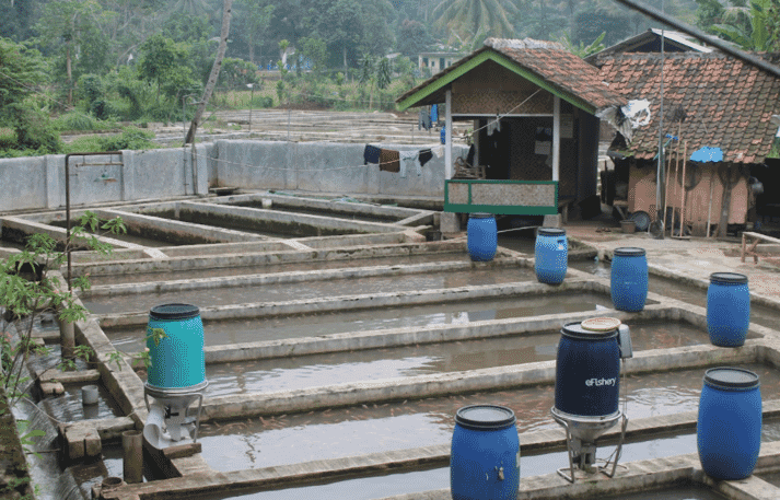 eFishery, which was founded in 2013 and makes affordable automatic feeders, was one of Indonesia's earliest aquaculture startups