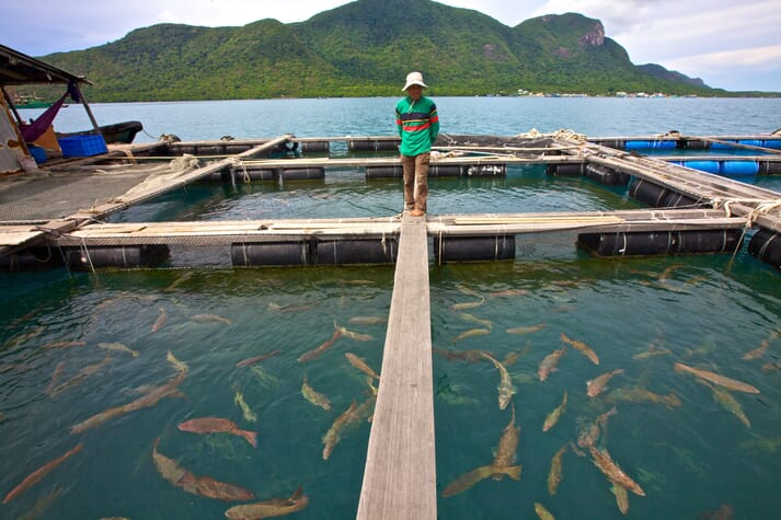 The carbon footprint of farmed aquatic animals varies immensely