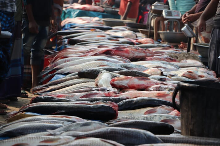 open air fish market