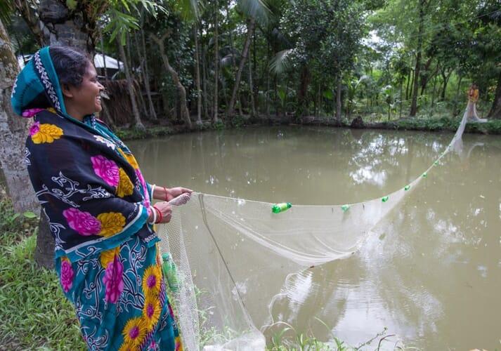 Harvesting mola in Khulna, Bangladesh