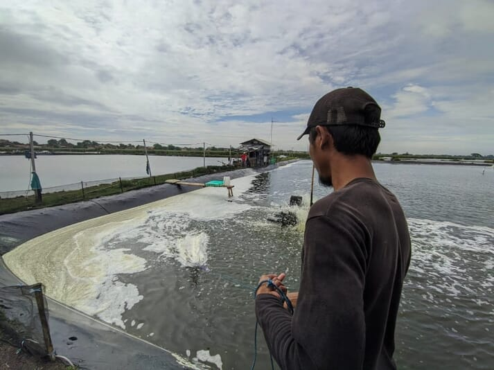Increasing volumes of Indonesian farmed shrimp were exported in 2020, suggesting that internationally credible certification would be a valuable addition for many shrimp farmers in the country.