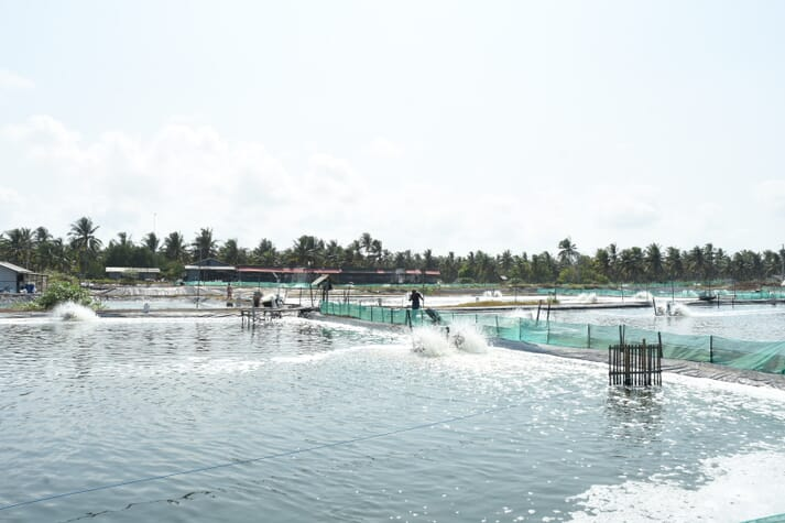 The IndoGAP standard aims to be accessible to shrimp farmers nationwide and credible to international buyers