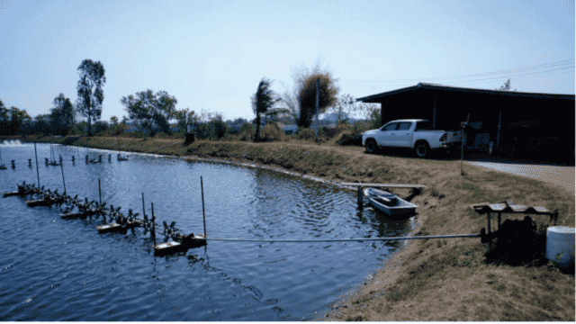 A typical long arm aerator, as favoured by shrimp farmers in Thailand