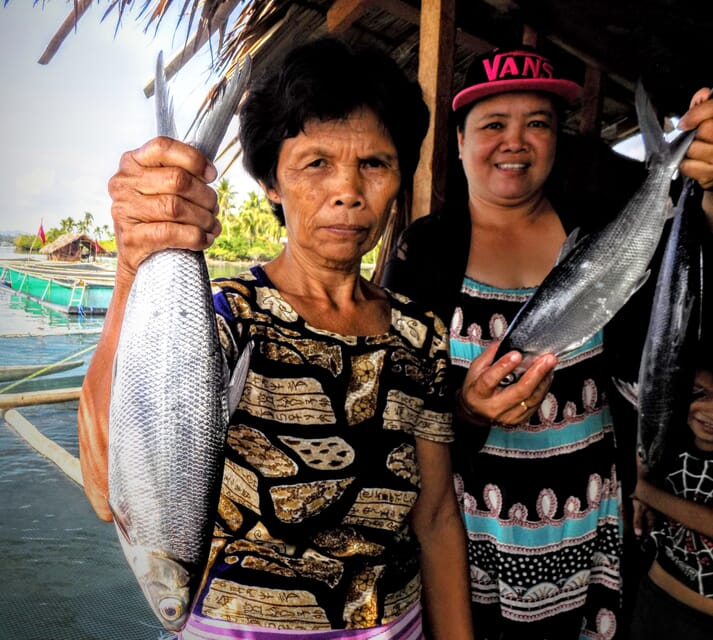 Milkfish, known locally as bangus, are the most widely cultured fish in the Philippines