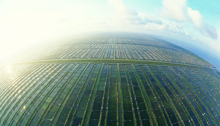 Indonesia has some of the largest shrimp farming areas in the world, but it is estimated that only 40 percent of the pond are currently in production