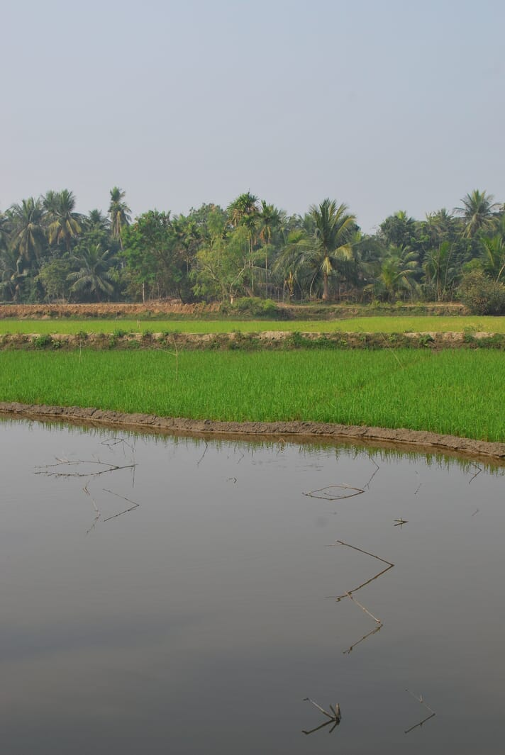This rice/prawn farm is an example of a relatively low intensity system