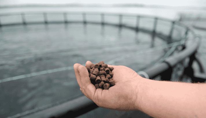 BioMar and Aquadis Naturellement are making sustainable aquafeed a priority
