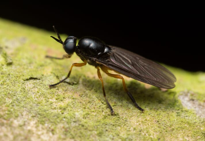 MagMeal is produced from the larvae of the black soldier fly, which are raised on food waste.