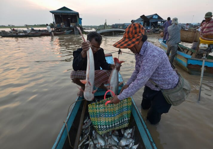 Cambodia's aquaculture sector produces 60,000 tonnes, valued at $240 million, a year