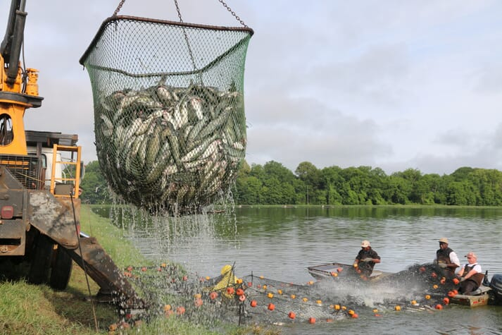 The paper discusses aeration practices used in catfish production, but its findings could be applicable to a variety of pond-produced species